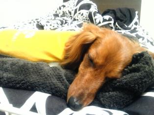 黄色いパジャマ