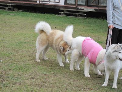 IMG_1857エロ犬