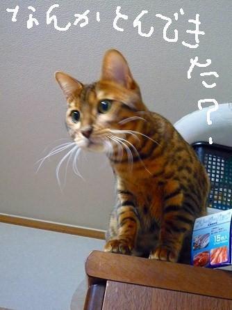 s-優野3ん 0390