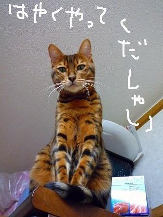 s-優野3ん 0450