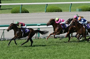 20090628-00000505-sanspo-horse-view-000.jpg
