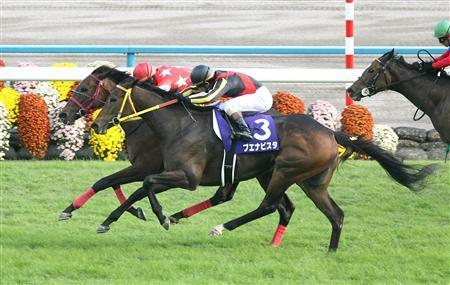20091018-00000515-sanspo-horse-view-000.jpg