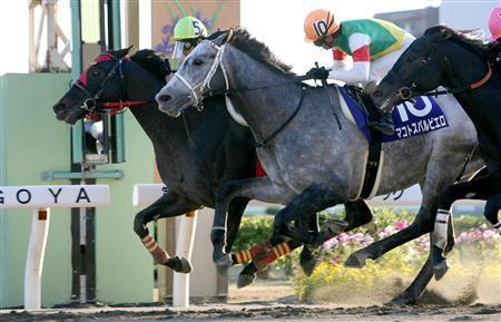 20091103-00000514-sanspo-horse-view-000.jpg
