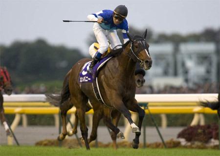 20091112-00000004-kiba-horse-view-000.jpg