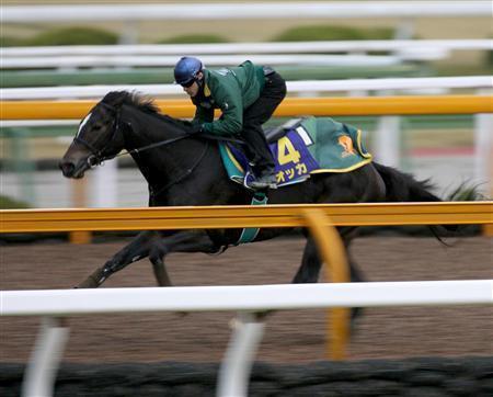 20091118-00000520-sanspo-horse-view-000.jpg