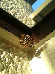 蜂の巣造り-2_256