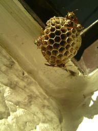 蜂の巣造り-3_256