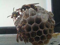 蜂の巣造り-7_256