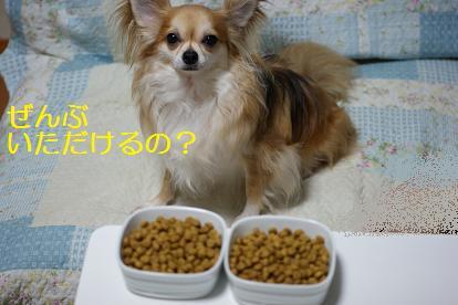 沢山食べたい