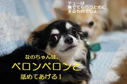 ベロベロ星犬