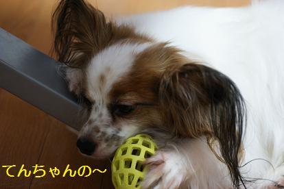 愛しのボール♪