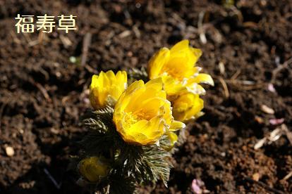 花言葉は永久の幸せ