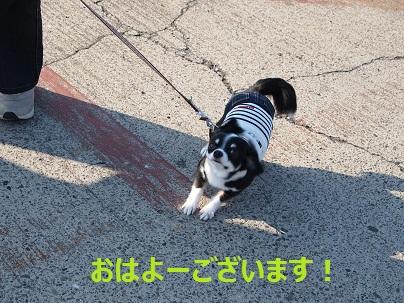 まりちゃん登場♪