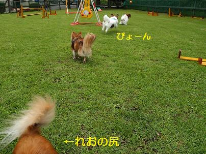 飛行犬(後ろ姿)