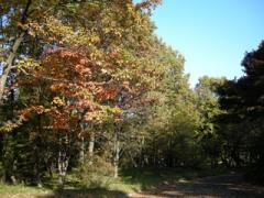 28.二の丸雑木林