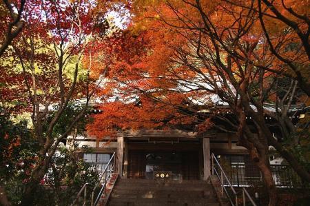 紅葉 京都