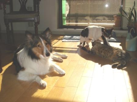 Cats  Dog2