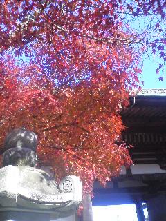 紅葉in石山寺