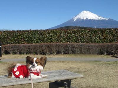 2009 お正月 富士川