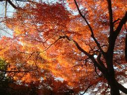 西公園の紅葉