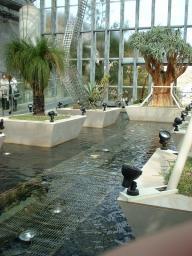 奇跡の星の植物館の3