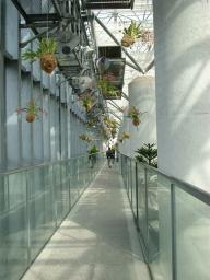 奇跡の星の植物館の2