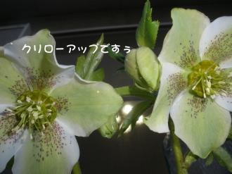 P2230052.jpg