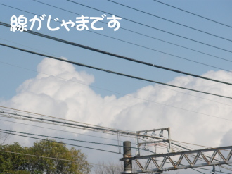 P3080128.jpg