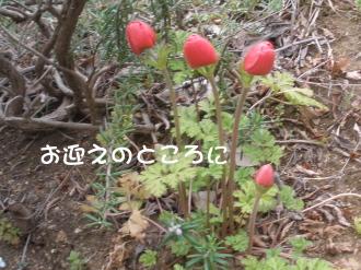 P4020135.jpg