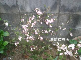P4080049.jpg