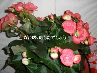 P6190391.jpg