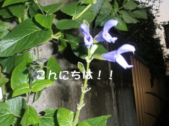 PA030193.jpg
