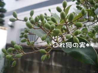 PA040200.jpg