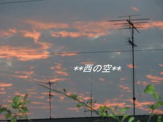 PA110238.jpg