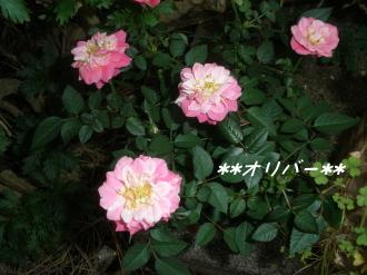 PA140242.jpg