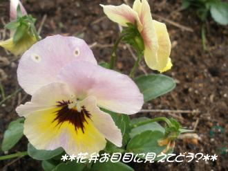 PA160246.jpg