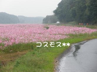 PA200279.jpg