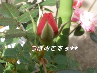 PA220291.jpg