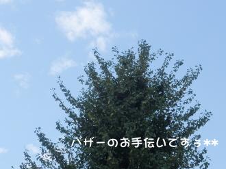 PB060041.jpg