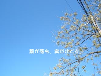 PC030148.jpg