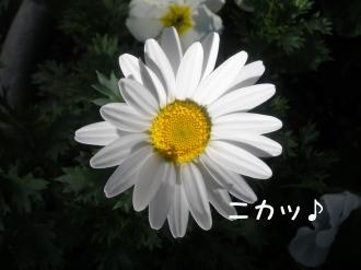 PC280003.jpg