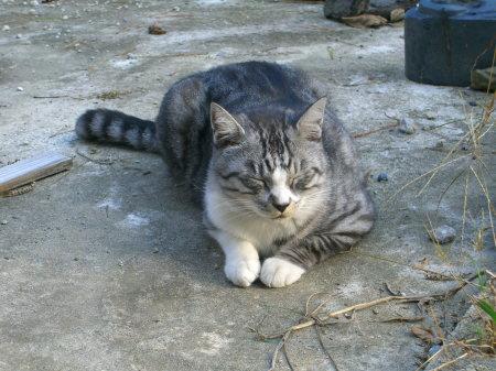 浜メグリの猫_20091017