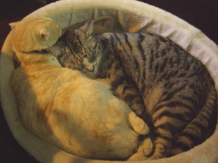 浜メグリの猫_20110416