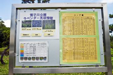 arakogawa.jpg