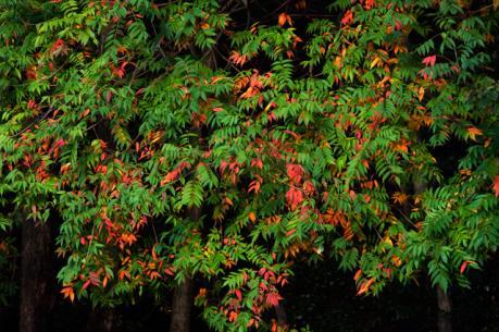 fall_5.jpg