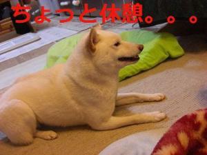 025_20090217204351.jpg