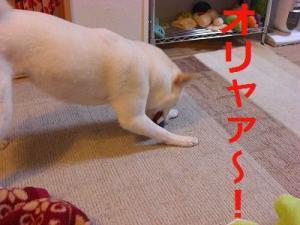 043_20090206204451.jpg