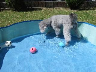 水遊びフラン