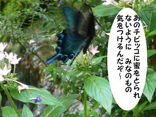maika21072234.jpg