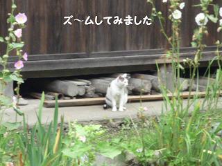 maika2107227.jpg